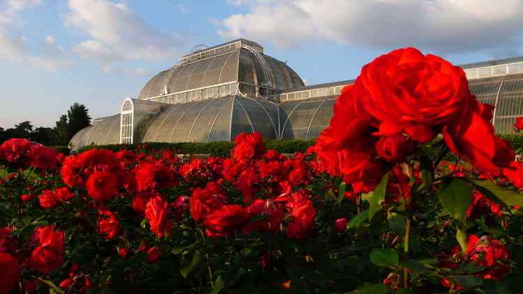Flowers at Kew Royal Gardens, London